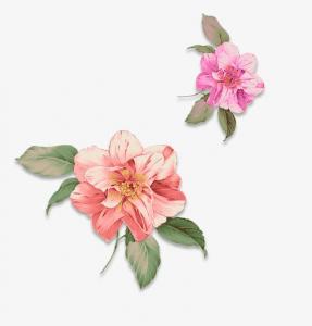 vẽ hoa bằng màu nước