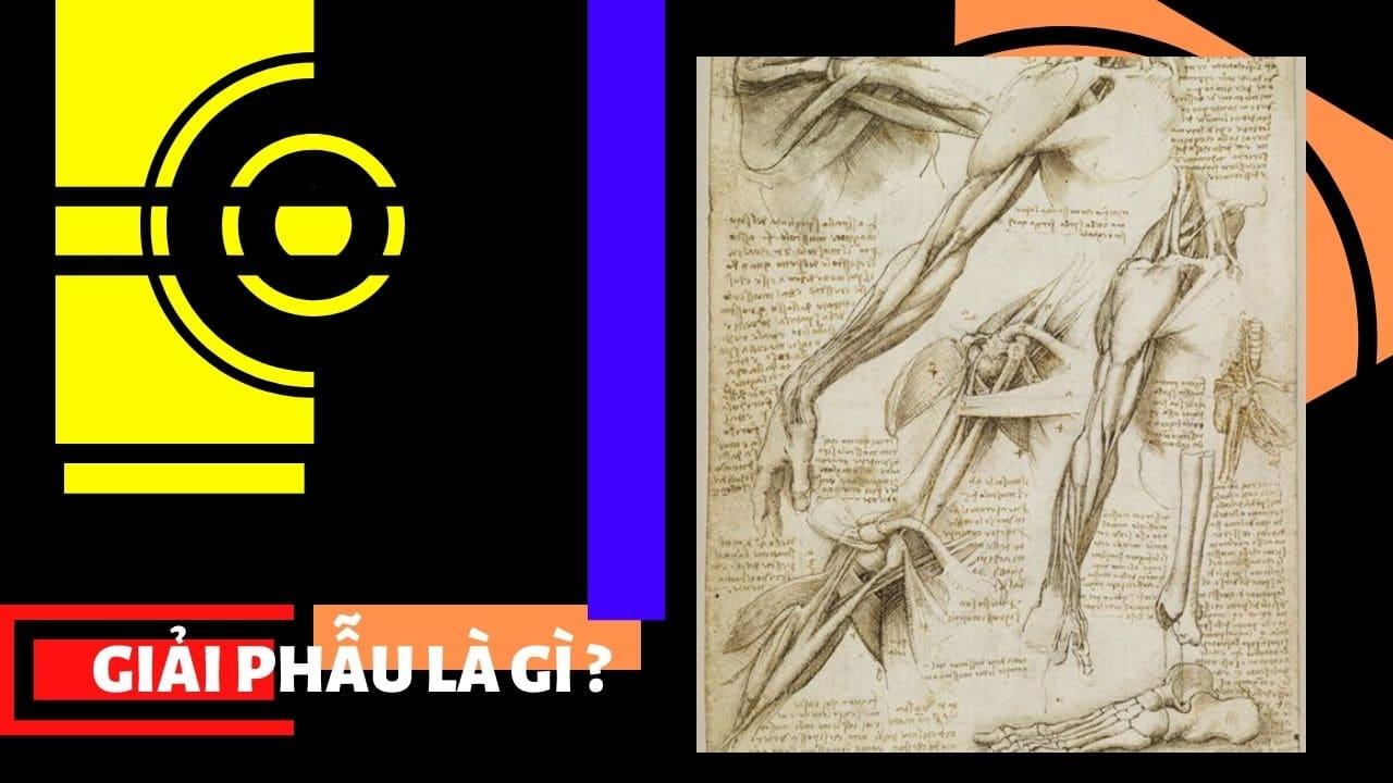Ngôn ngữ nghệ thuật : giải phẫu là gì ?